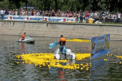 Duck race start Stock Photography