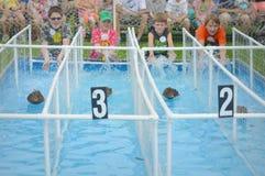 Duck Races bij de Markt Royalty-vrije Stock Afbeeldingen