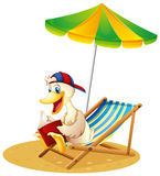 A duck reading at the beach Royalty Free Stock Image