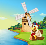 A duck reading a book near the windmill Stock Images