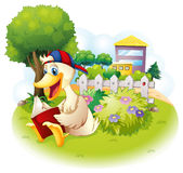 A duck reading at the garden with a fence Stock Images