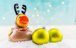 Duck Reindeer Low Angle en caoutchouc avec deux ornements verts Photo libre de droits