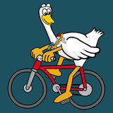Duck ridding cycle Royalty Free Stock Image