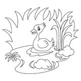 Duck In The River Black And White Coloring Page. Version vector illustration