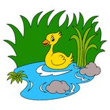 Duck In The River Color. Version royalty free illustration