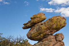 Duck on a Rock at Chiricahua National Monument USA Stock Photo