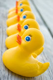 Duck Row Stock Photos
