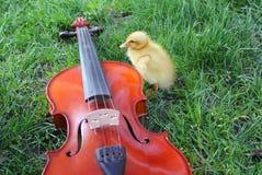 Duck runner near a violin. A duck runner near a violin Stock Photography