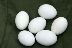 Duck's egg Royalty Free Stock Images