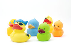 Duck,s royalty free stock images