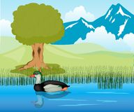 Duck sails in pond Royalty Free Stock Photo