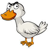 Duck with serious face. Illustration Stock Photos