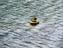 Duck shape stone in middle of water Stock Photo
