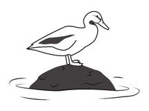 Duck sitting on a stone Royalty Free Stock Images