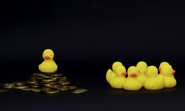 Duck society Stock Image