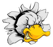 Duck sports mascot breakthrough Royalty Free Stock Photo