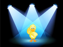 A duck with spotlights Stock Photo