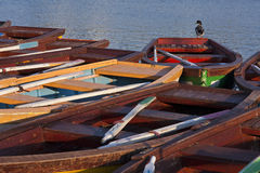 Duck standing on a boat Stock Images