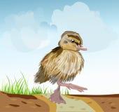 Duck sulla strada Immagine Stock Libera da Diritti