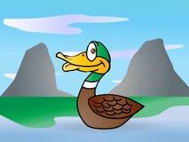Duck Swim Royalty Free Stock Image