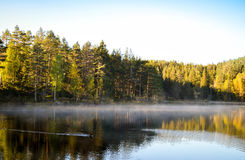 Free Duck Swimming At Misty Silent Lake Royalty Free Stock Photo - 92657875
