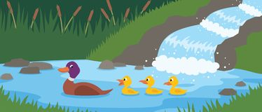 Duck Tale Royalty Free Stock Photography