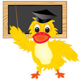 Duck teacher Royalty Free Stock Image
