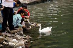 Duck Thirty Five Foto de Stock Royalty Free