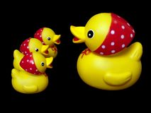Duck toy. Yellow rubber mother duck toy and child isolated royalty free stock images