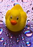 Duck the Toy Stock Photos