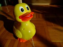 Duck toy staring at a sun. Photo of a toy duck Stock Photo