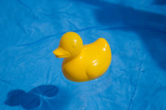 Duck toy in the water Royalty Free Stock Images