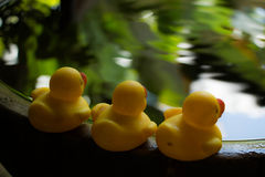 Duck toy on water Stock Image