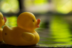 Duck toy on water Royalty Free Stock Images