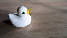 Duck toy. The white duck toy put on paquet floor stock photography
