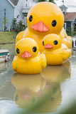 Duck toy. Yellow duck family in the lake stock photos