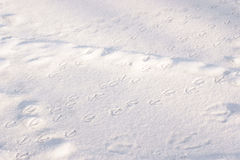 Duck trails in the snow Stock Photography