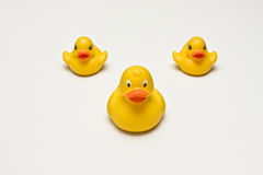 Duck triangle Royalty Free Stock Photography