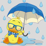 Duck with umbrella. Greeting card Duck with umbrella stock illustration