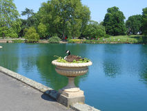 Duck in an Urn. Duck nesting in an ornamental Urn Royalty Free Stock Photography