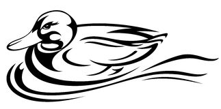 Duck vector. Swimming duck illustration - black and white outline Royalty Free Stock Image