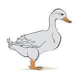 Duck vector illustration. Stock Photos