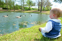 Duck Watching Stock Image