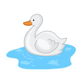 Duck in water. Cartoon isolated  illustration on white background Stock Photos