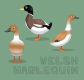 Duck Welsh Harlequin Cartoon Vector illustration Arkivbilder