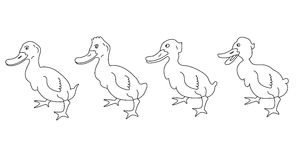 Duck. On a white background - vector Stock Images