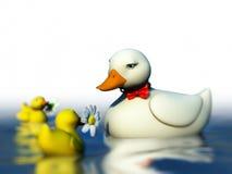 ducka ducklings Royaltyfri Fotografi