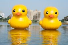 ducka gummi Royaltyfri Fotografi