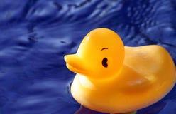 ducka säger Arkivbilder