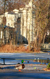 ducka theatren Royaltyfri Fotografi